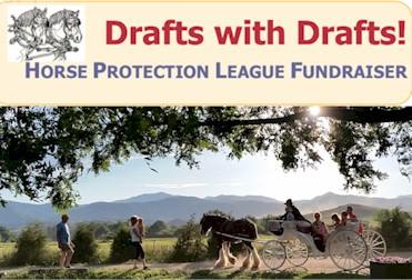 Horse Protection League
